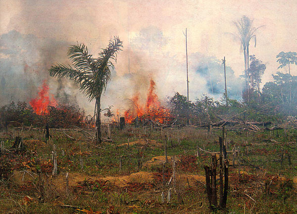 The Brazilian government is making a concerted effort to burn the Amazon.  This will have serious consequences for the rest of the world.